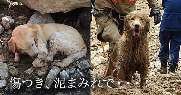 救助犬.jpg